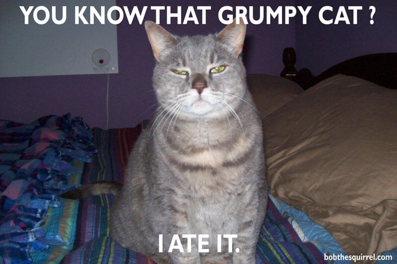 grumpy grumpier cat...